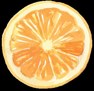 Illustration of a lemon slice