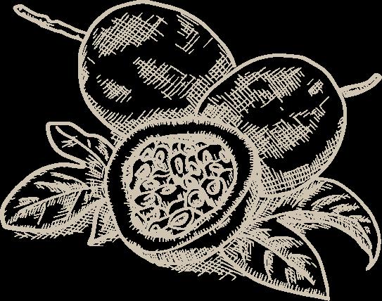Passion fruit illustration