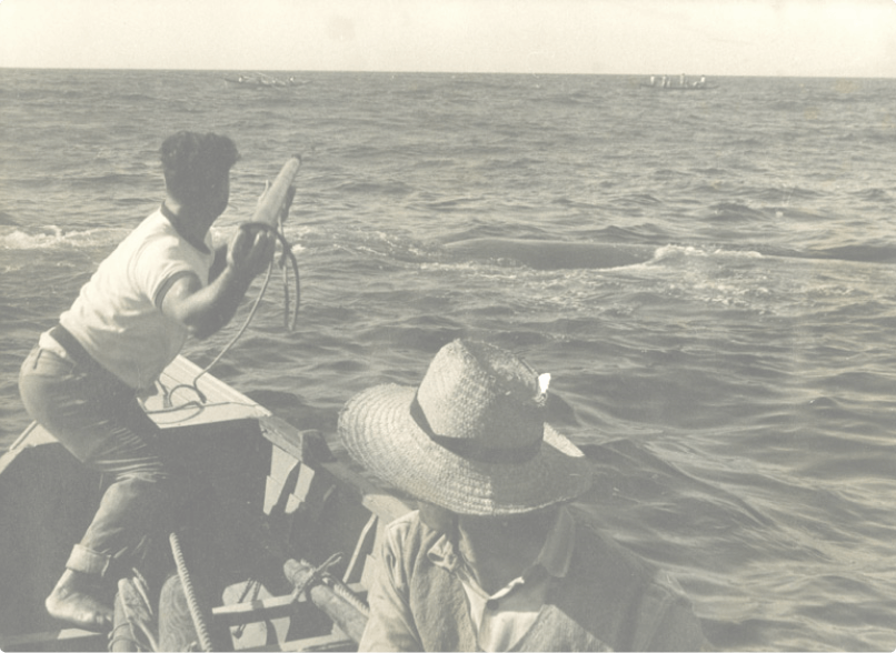 old photo of whalers hunting a whale in the Azores
