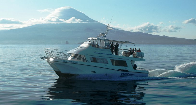 Boat josé azevedo, during a whale watching tour, in Faial, with the island of Pico in the background