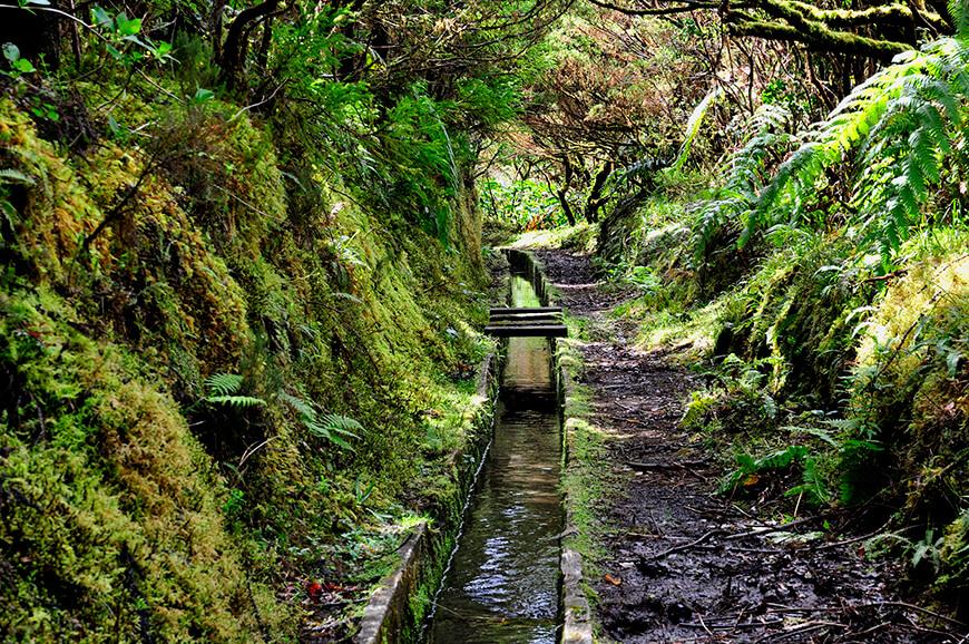 Trilho das Levadas na ilha do Faial