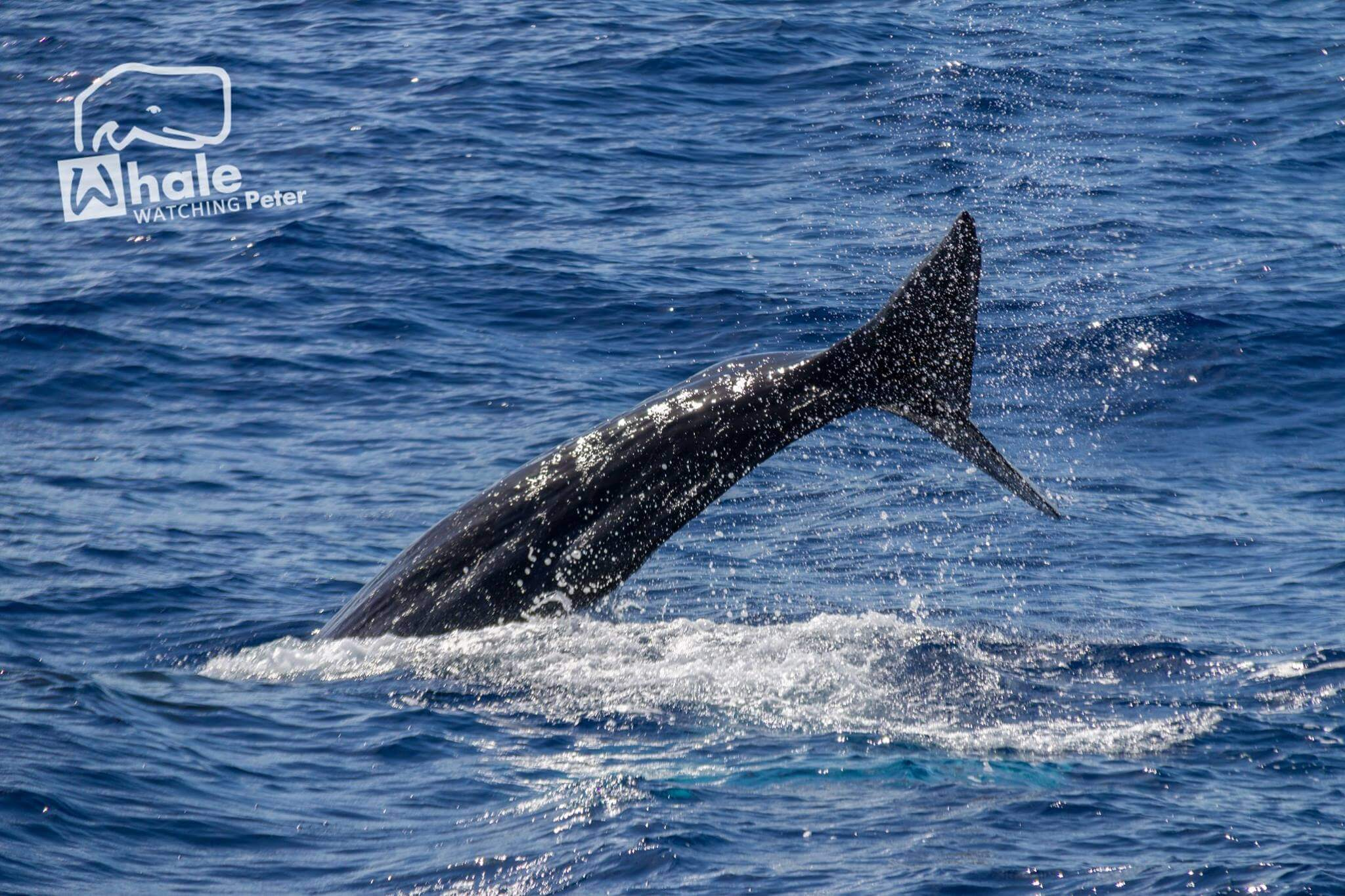Dolphin and whale photography during whale watching activity with peter cafe sport